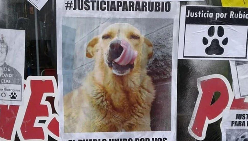 Arrastró a un perro hasta matarlo en Mar del Tuyú: marchas en todo el país para pedir justicia