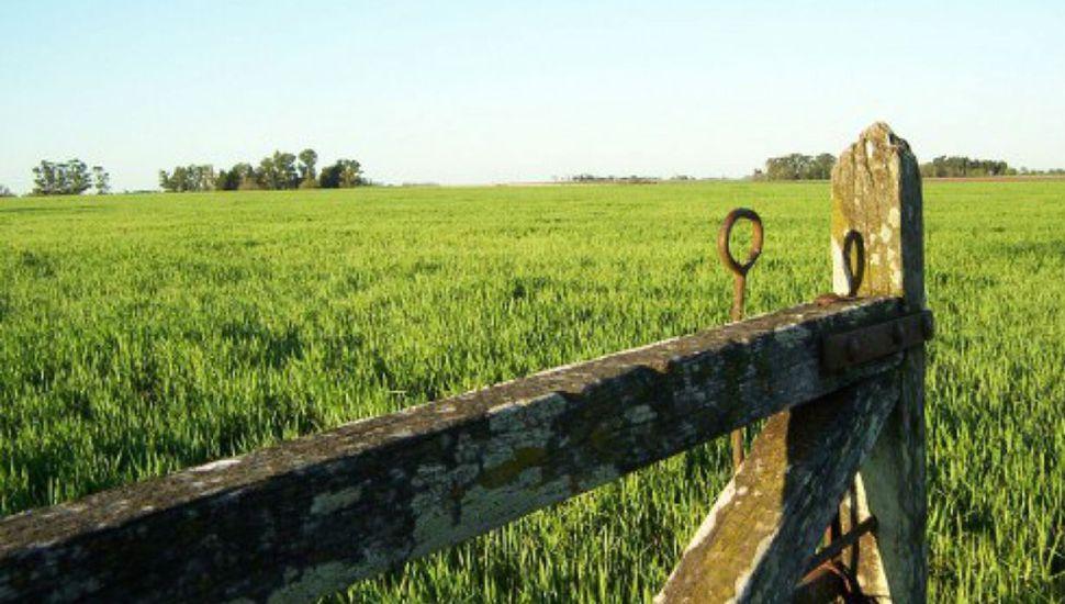 Se realizaron menos operaciones por compra-venta de campos en un año