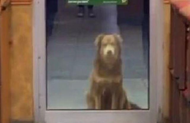 Tierno: una perrita va a un local de comida rápida todos los días para que la alimenten