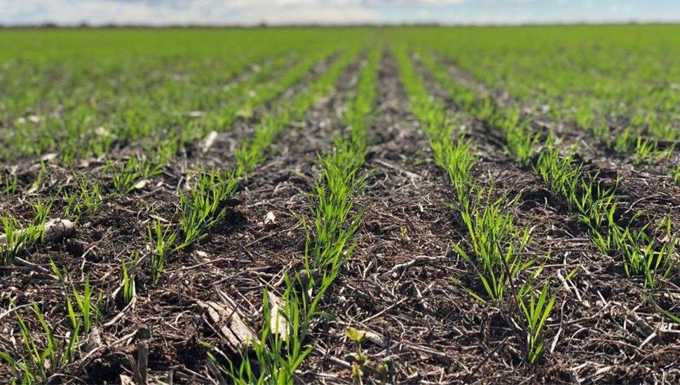 Complicaciones climáticas para los cultivos de invierno