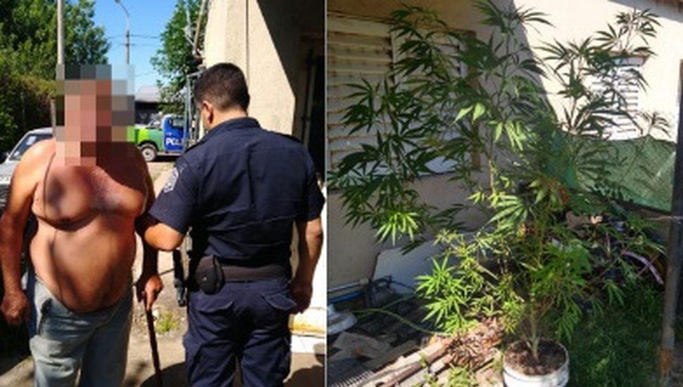 Secuestraron una planta de marihuana en Rojas