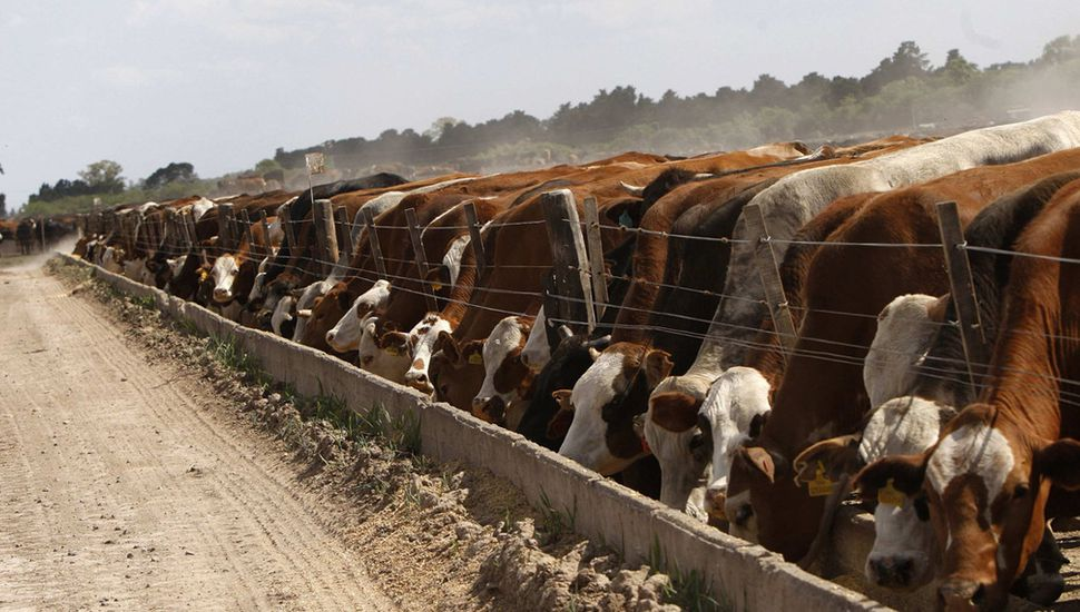 Alimentos medicados para animales