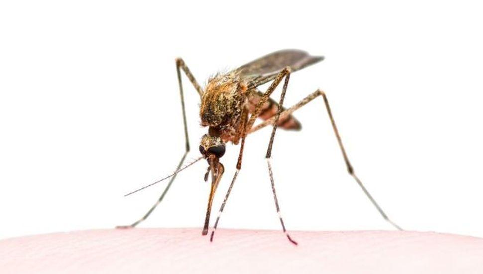 Viamonte puso en marcha un plan preventivo ante enfermedades transmitidas por insectos