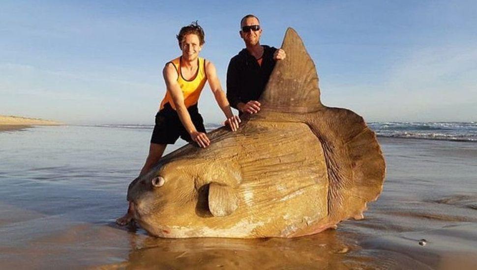 """Un pez con """"forma extraterrestre"""" en las costas australianas"""