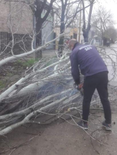 Intensas ráfagas de viento y árboles caídos en Chacabuco