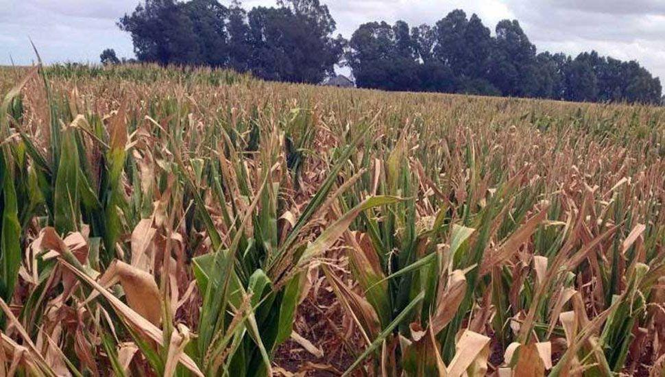 Muchos de los campos fueron afectados por la última sequía.