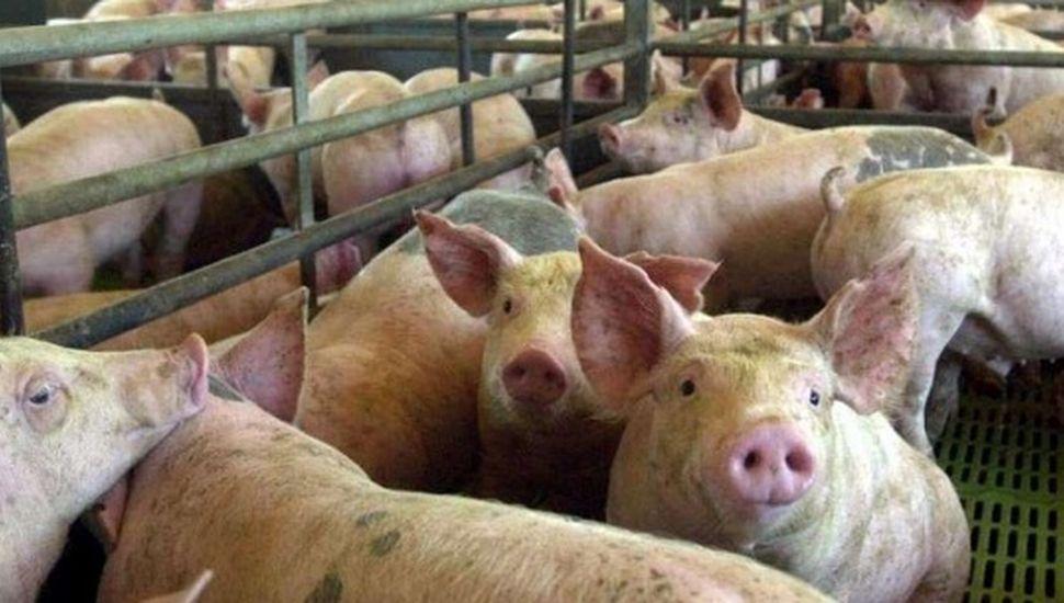 Buscan personal para sala de faena de cerdos y ovinos ubicado en Los Toldos