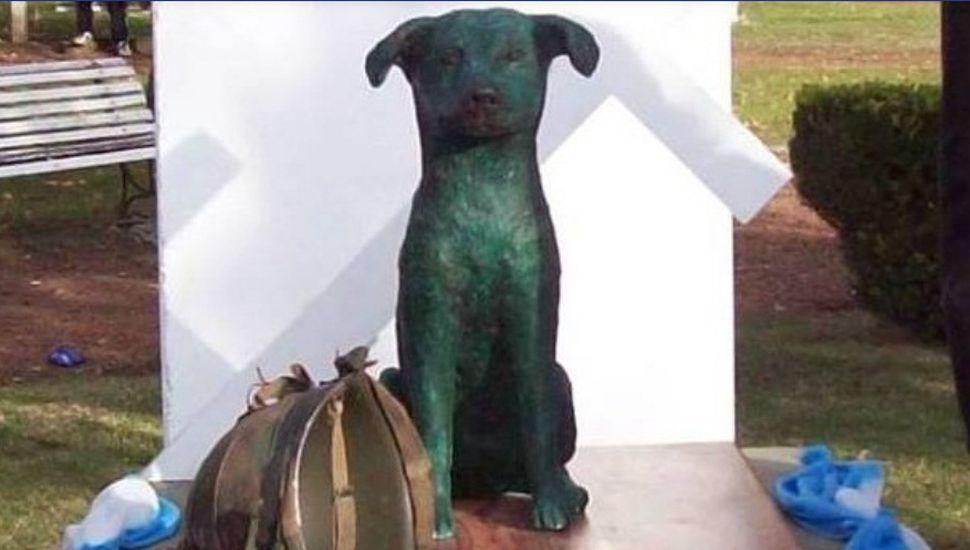 La historia de Tom, el perro que descansa en Malvinas