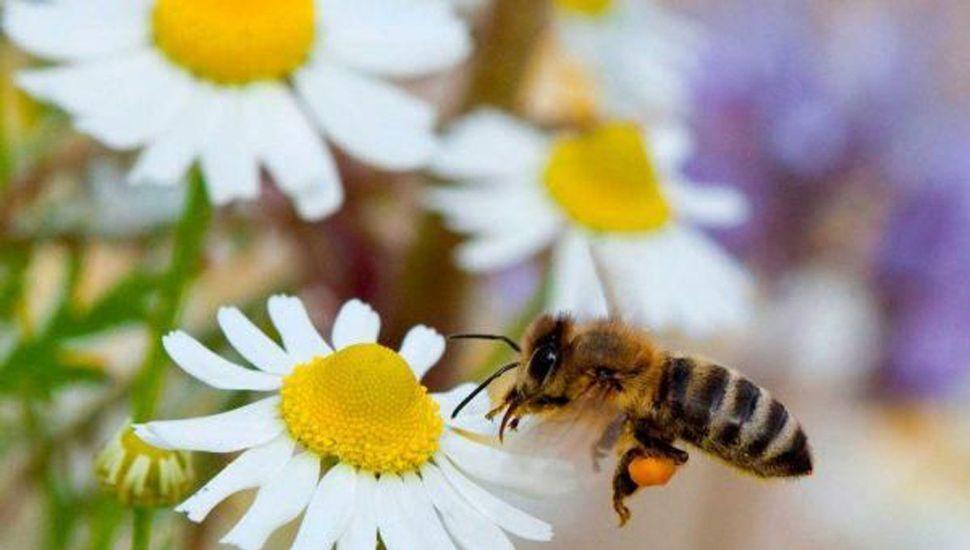 Alergias, los cambios climáticos  favorecen mucho a su aparición