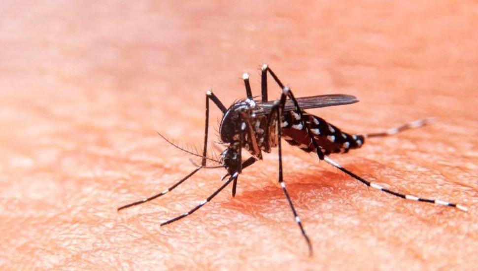 Ascienden a 75 los casos  de dengue en La Plata