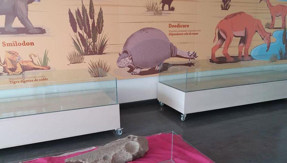 En sala de exposición se exhibirán los restos fósiles.