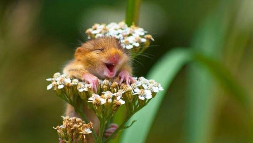 Las 5 mejores fotos de la naturaleza que te sacarán una sonrisa