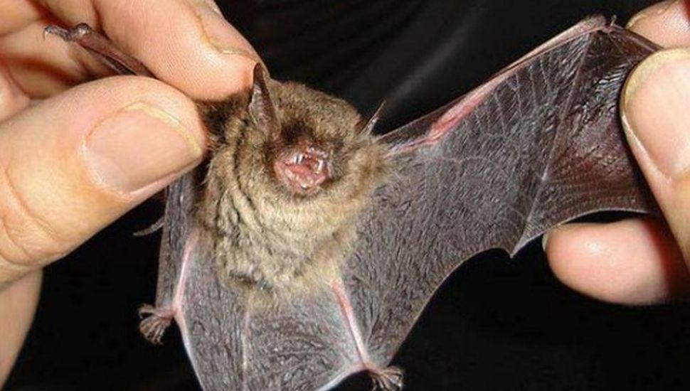 Alerta en Rojas: caso positivo de rabia en un murciélago