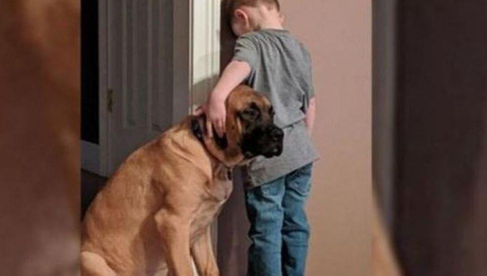 La foto viral del perro que consuela a un nene que estaba en penitencia mirando la pared