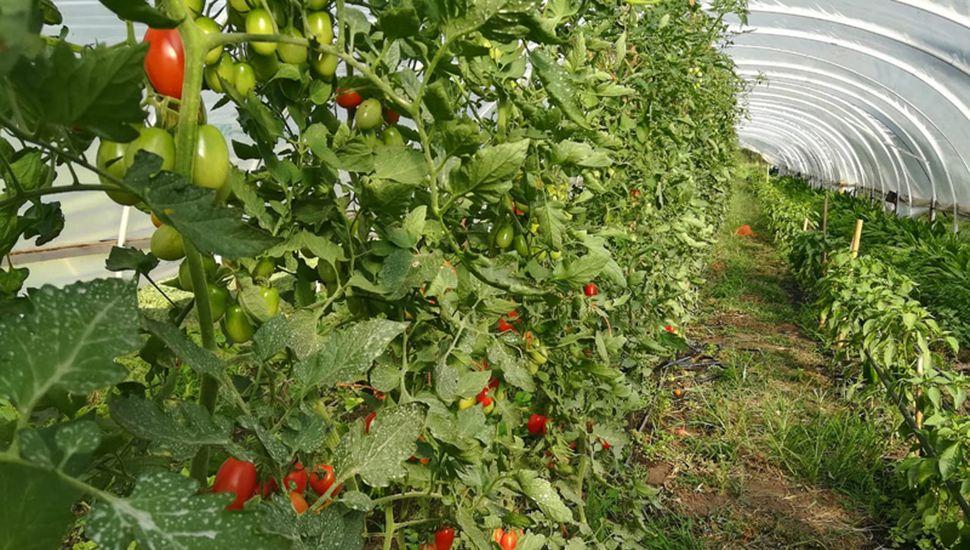 Sol de Llano prepara bolsones con frutas y verduras orgánicas, por encargue.