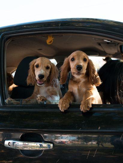 En el Día del Animal, se aplicaron vacunas antirrábicas a perros y gatos