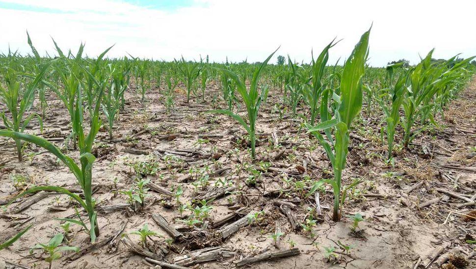 El campo, en emergencia por la sequía.
