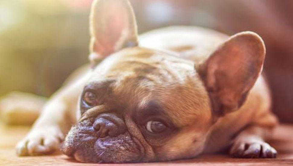 Un perro logró morderse la cola, lo grabaron y su reacción es imperdible