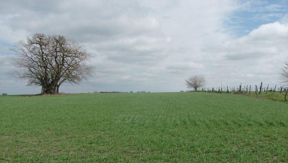 El avance de siembra de trigo ascendió al 21,4 % de las 5.500.000 hectáreas proyectadas para la campaña.