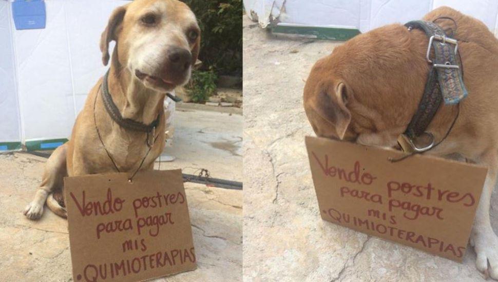 La irresistible historia del perro que vende postres para juntar plata para su quimioterapia