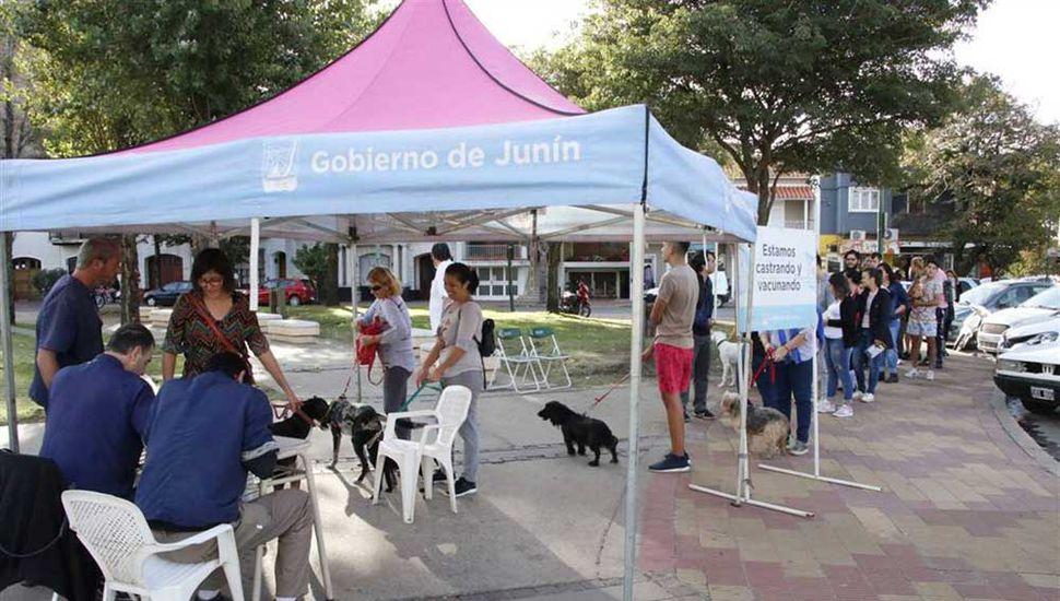 La dirección de Zoonosis realizó distintas actividades en el Día del Animal.