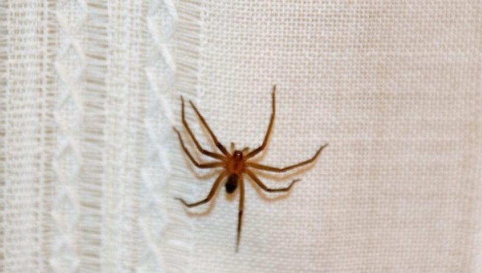 Un joven internado en Chacabuco tras ser picado por una araña de rincón