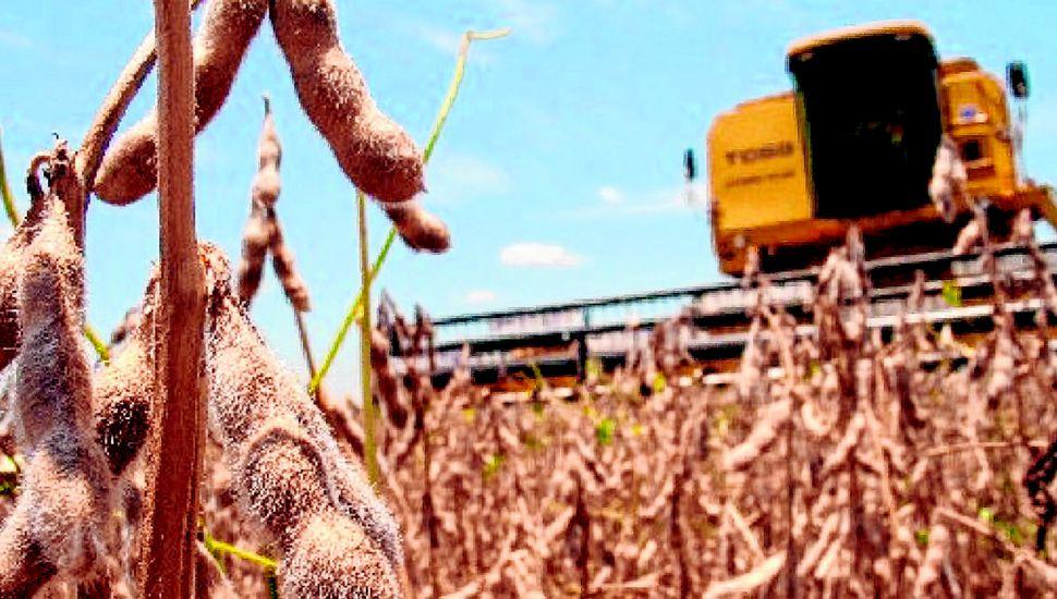 El clima favoreció el desarrollo de los granos gruesos, que aportarán una cosecha récord y fuerte ingreso de divisas.