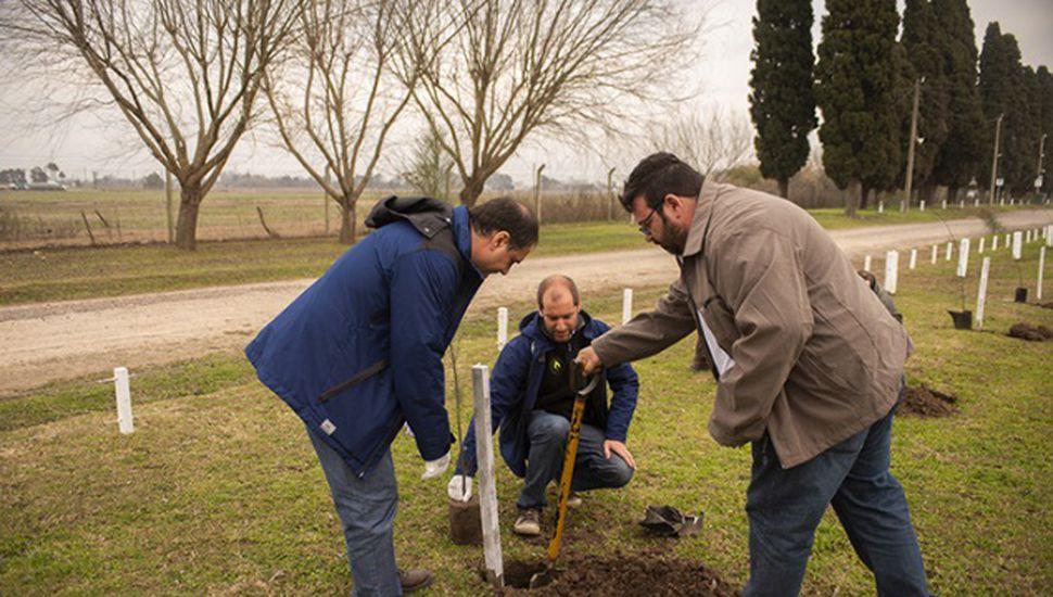 """Monsanto plantó árboles para """"balancear la huella de carbono"""""""