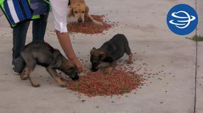 Ayuda humanitaria a pobladores y animalitos que permanecieron en Ermita de los Murillo, Jerez