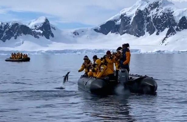 Noticia_20210608_Pinguino_orcas.jpg