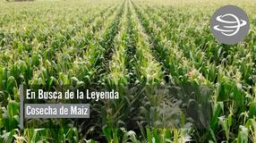 En Busca de la Leyenda; Cosecha de Maíz