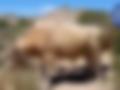sequía_sombrerete_ganado