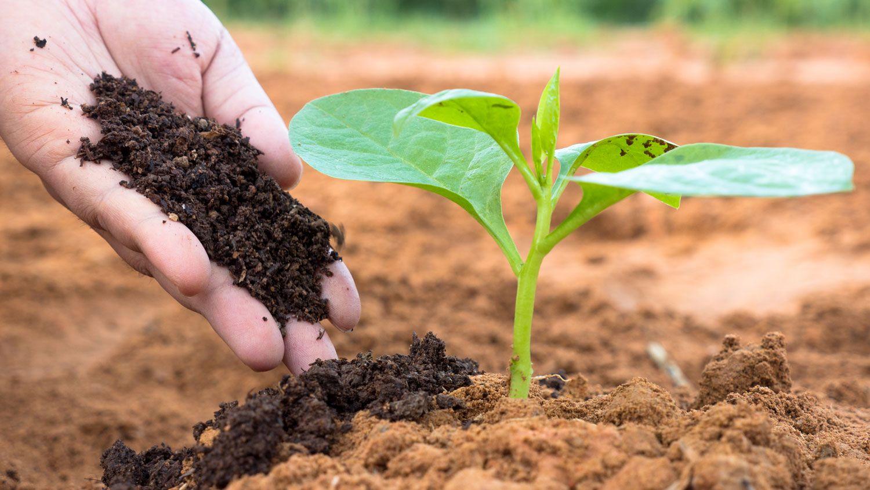 Food security - a global concern