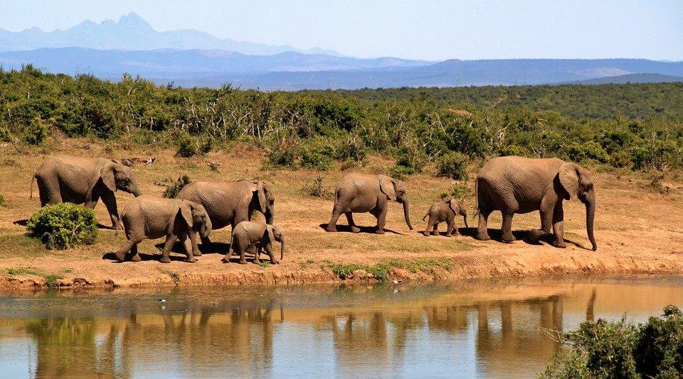 Big Five in Zuid Afrika