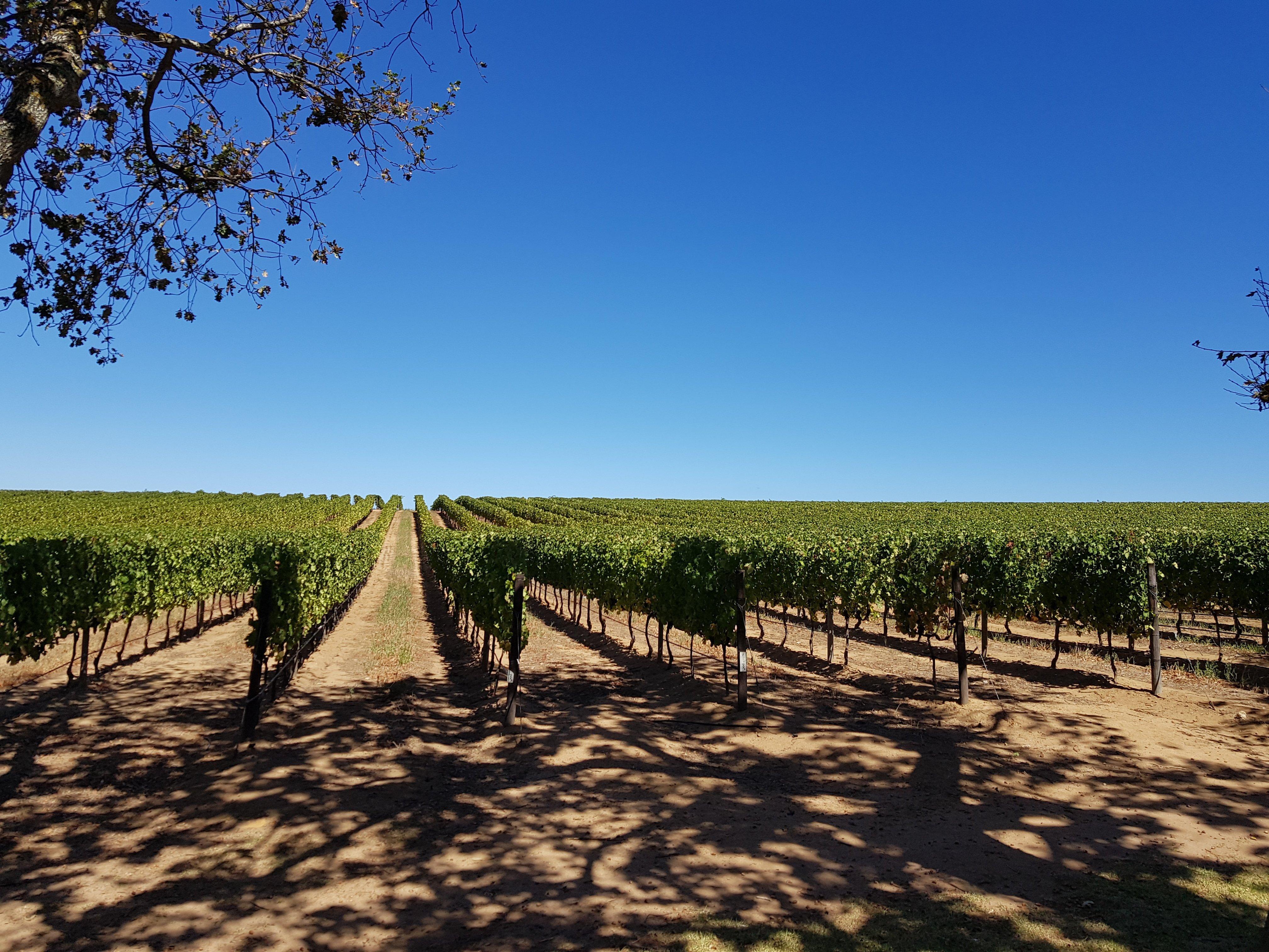 Vineyards Kaapstad - Zuid Afrika