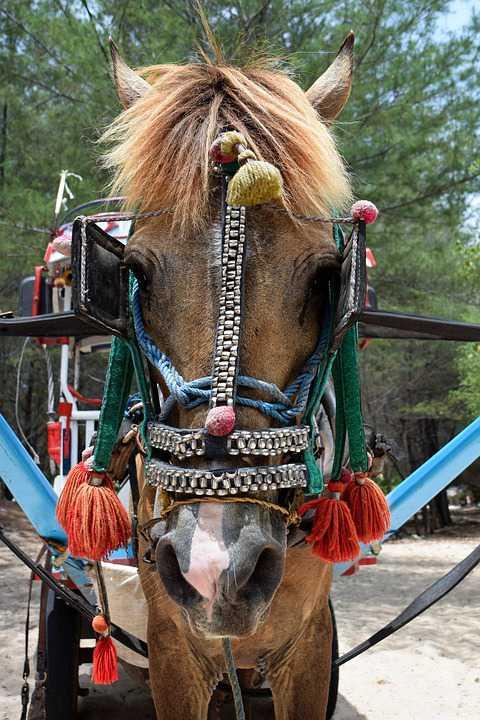 paard en kar in gili