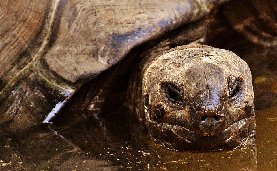 Schildpadden spotten op de Galapagos Eilanden