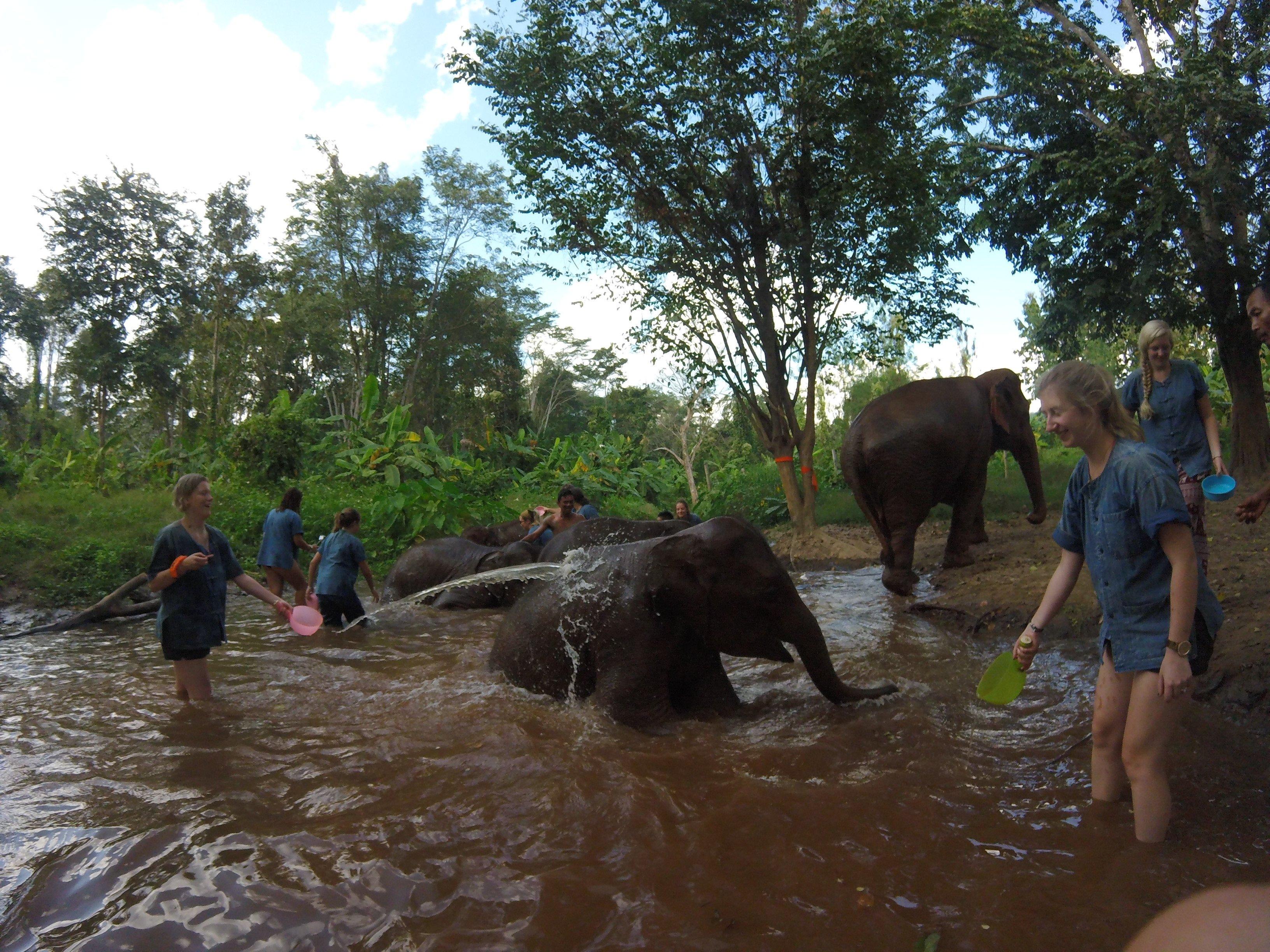 Baden met de olifanten - excursie via Elephant Nature Park Chiang Mai