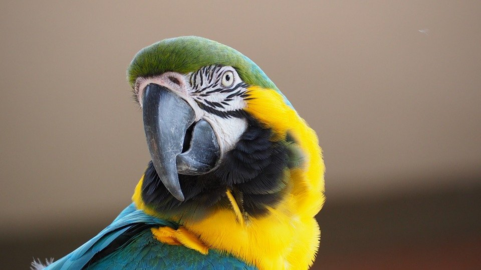 Dieren spotten in het Amazonewoud