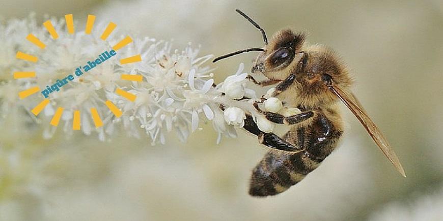 piqûres d'abeilles ,se soigner naturellement