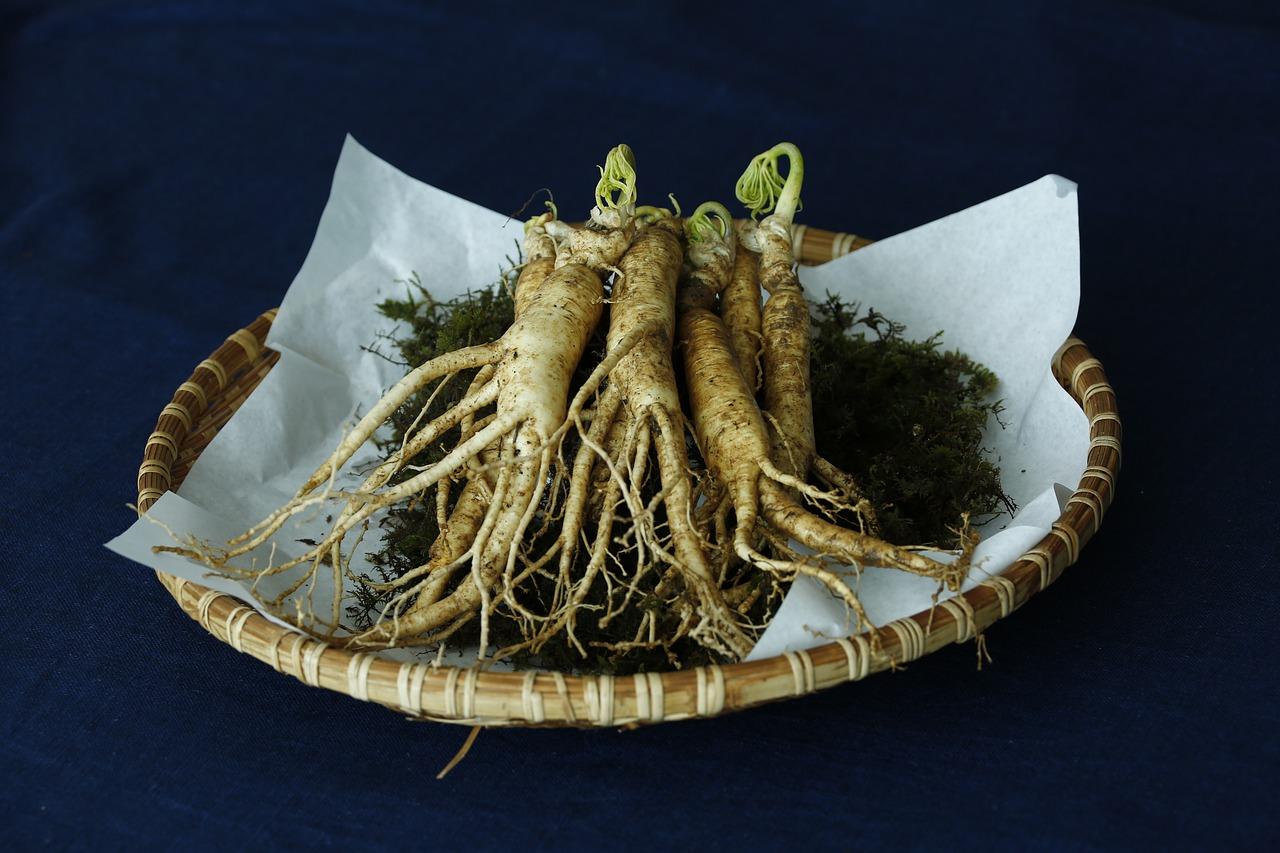 Racines de Ginseng disposées dans un panier.