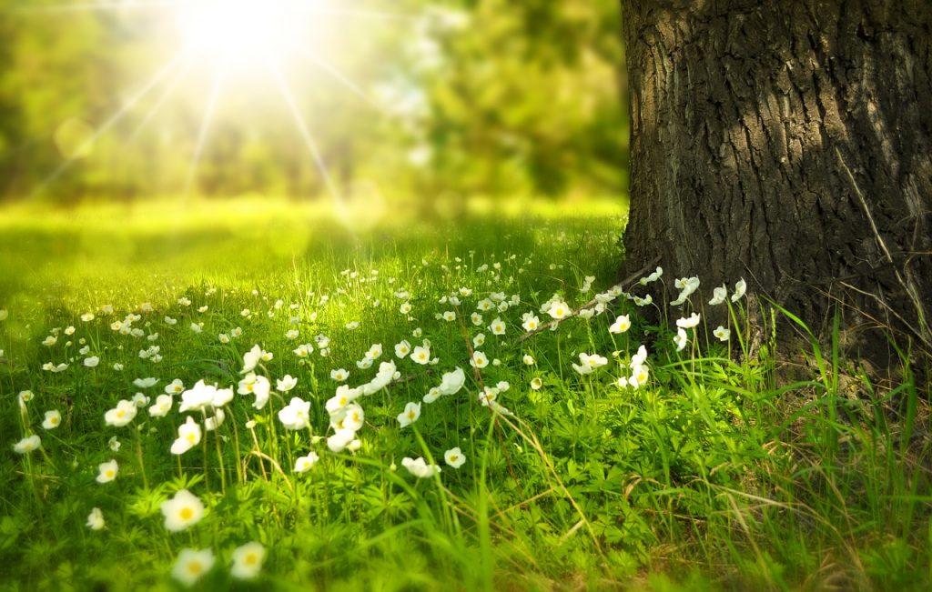 Le printemps, saison du foie