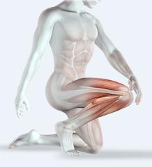 La carnosine, un consituant essentiel des muscles: bienfaits et danger de ce dipeptide.