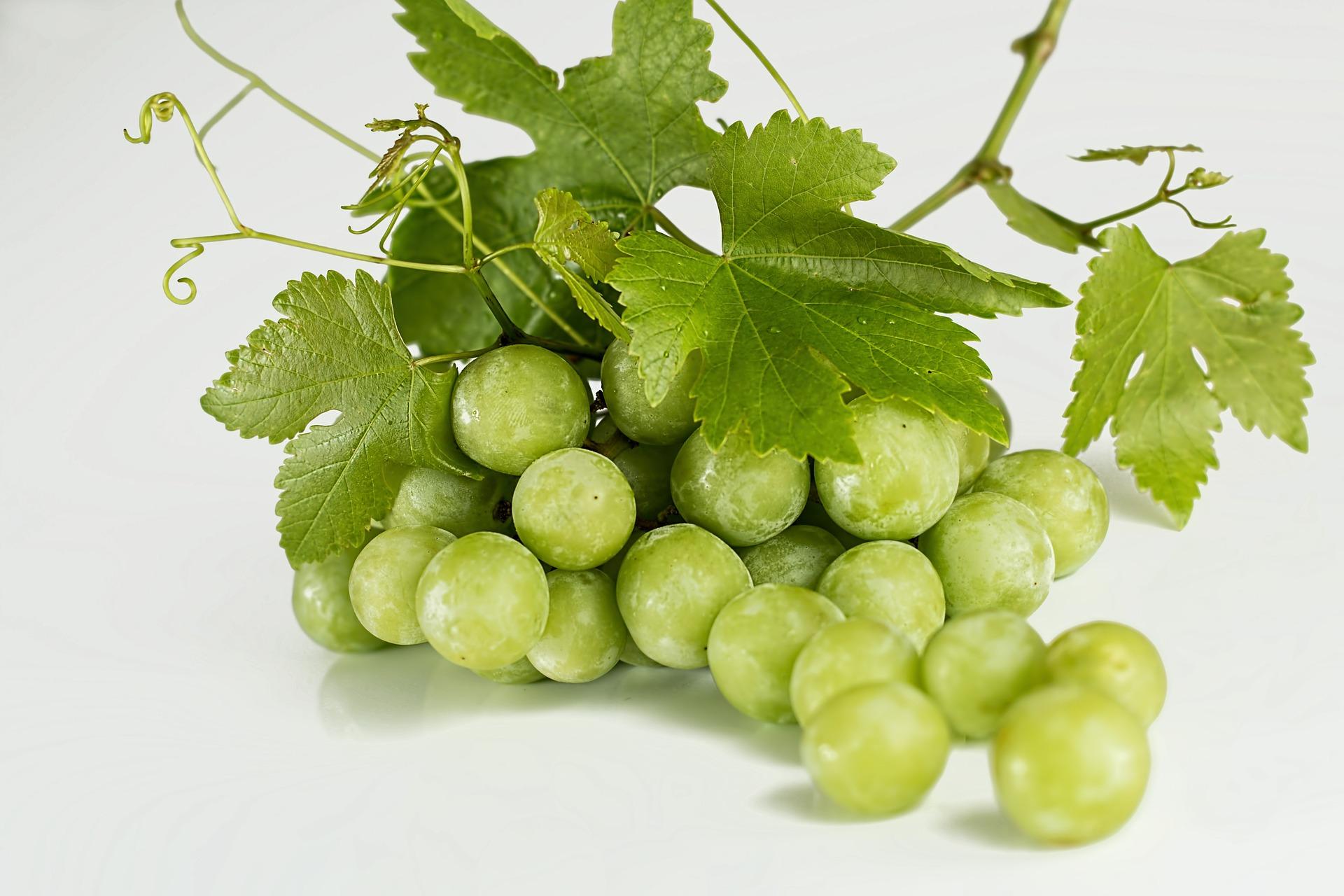 Les extraits pépin de raisins sont un trésor pour la santé.
