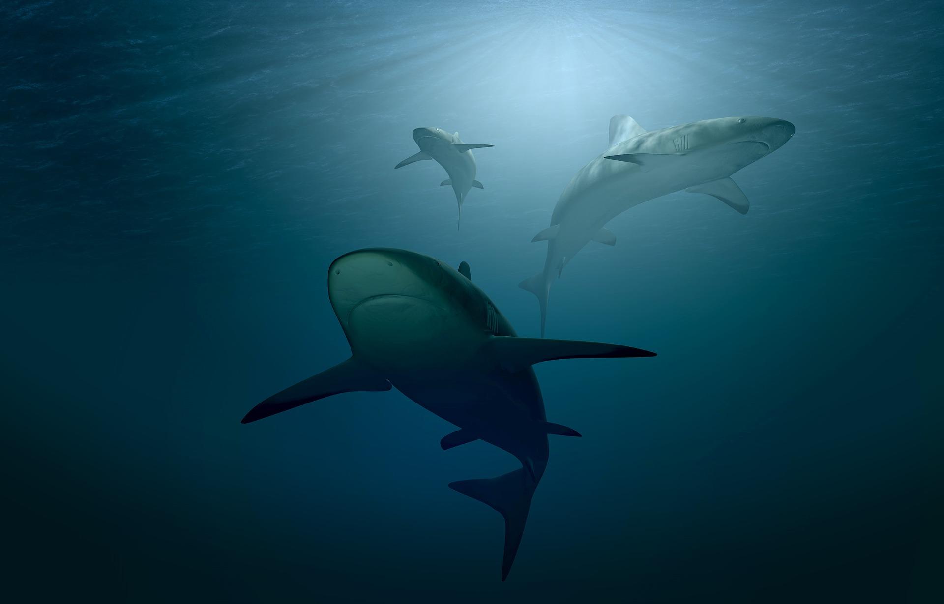 L'huile de foie de requin contient de l'alkylglycerol, un nutriment anti-tumoral.