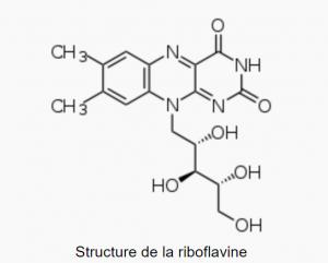 Structure de la vitamine B2