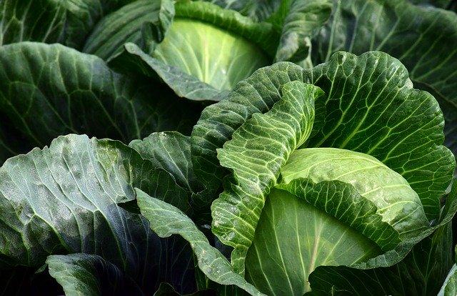 Vitamine K et légumes verts à feuilles