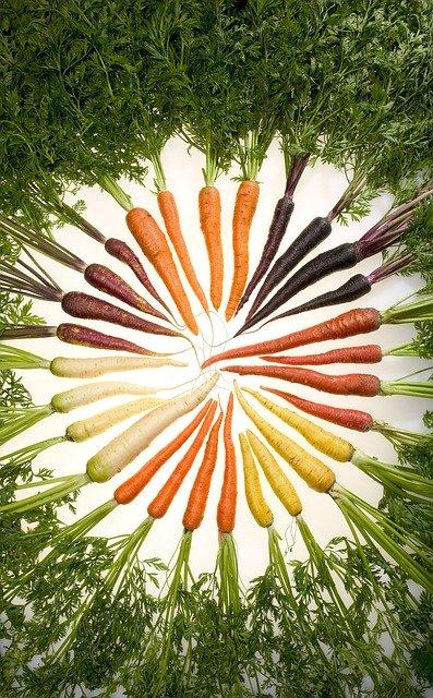 Le Bêta-carotène est présent en abondance dans les carottes.