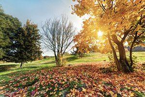 Comprendre le phénomène des saisons est important pour se sentir en meilleure forme, améliorer sa santé.