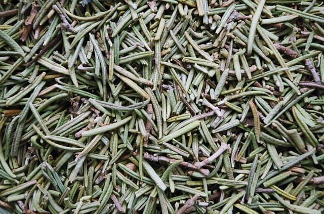 L'huile essentielle de romarin à verbénone dispose de nombreuses vertus.